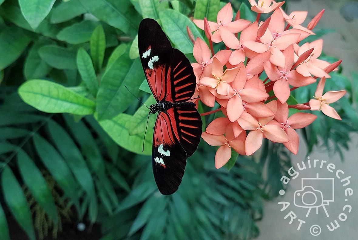 Fotografía de mariposa en flor